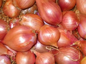 what is shallot good for?